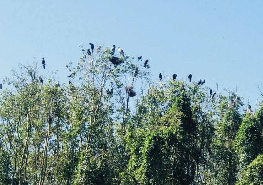 sân chim khu du lịch gáo giồng